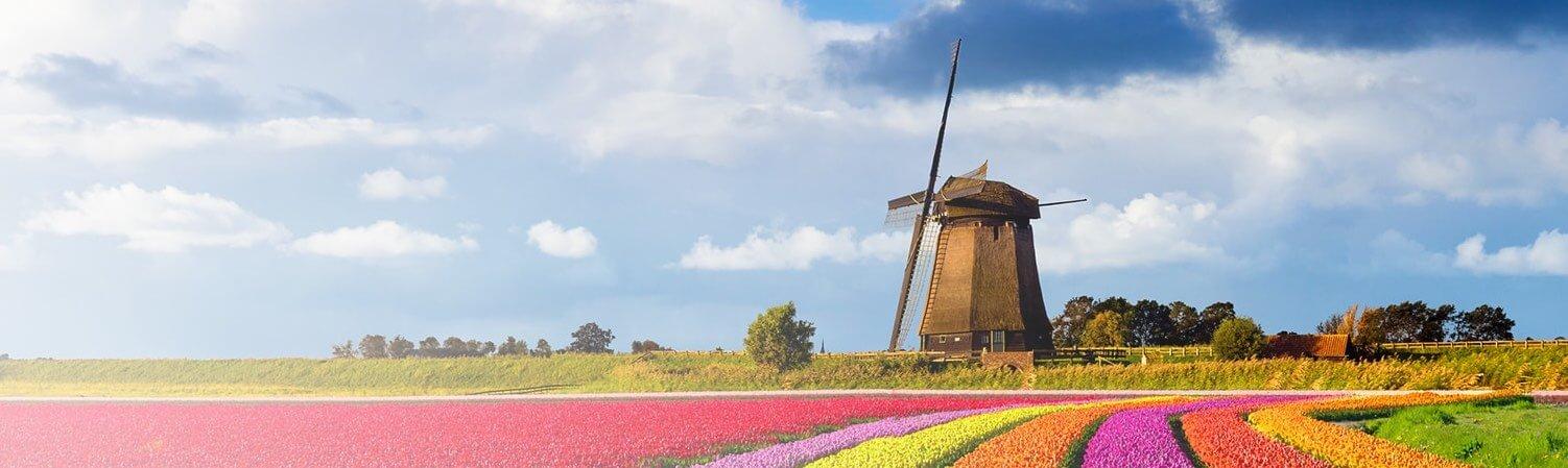 Exportar para a Holanda